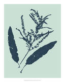 Indigo & Mint Botanical Study IV Giclee Print by Vision Studio