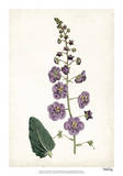 Lavender Florals VI Giclee Print by  Curtis