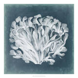 Azure Coral III Giclee Print by Vision Studio