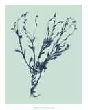 Indigo & Mint Botanical Study VI Giclee Print by  Vision Studio