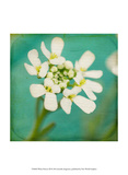 White Flowers III Print by Jennifer Jorgensen