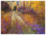 Lost Canyon Larkspurs II Giclee Print by Chris Vest