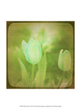 White Flowers VIII Prints by Jennifer Jorgensen