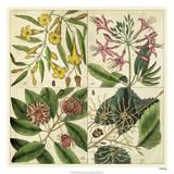 Catesby Botanical Quadrant I Giclee Print by Mark Catesby