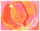 Cabbage Rose I Giclee Print by Carolyn Roth