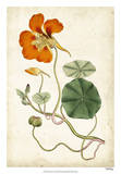 Tangerine Floral VI Giclee Print by  Curtis
