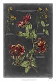 Vintage Botanical Chart II Giclée-Druck von  Vision Studio