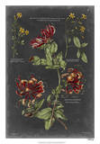 Vintage Botanical Chart II Giclee Print by  Vision Studio