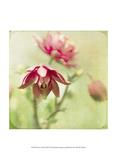 Dream in Pink VIII Stampe di Jennifer Jorgensen