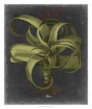Besler Dramatique IV Giclee Print by Vision Studio