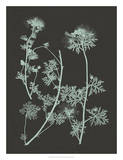 Mint & Charcoal Nature Study IV Giclee Print by Vision Studio