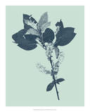 Indigo & Mint Botanical Study V Giclee Print by Vision Studio