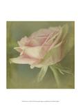 Dream in Pink VI Stampe di Jennifer Jorgensen
