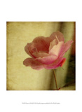 Dream in Pink XII Art by Jennifer Jorgensen