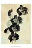 Orchid Blush Panels III Prints by James Burghardt