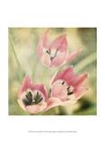 Dream in Pink IV Stampe di Jennifer Jorgensen