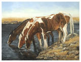Tres Caballos Giclee Print by Kathy Winkler