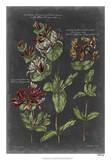 Vintage Botanical Chart IV Giclée-Druck von  Vision Studio