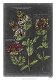 Vintage Botanical Chart IV Giclee Print by  Vision Studio