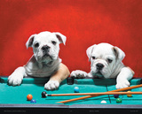 Puppies at Pool Table Posters