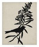 Audubon Silhouette I Giclee Print by Vision Studio