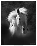 Horse Portrait V Giclee Print by David Drost