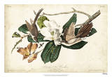 Black-billed Cuckoo Giclee Print by John James Audubon
