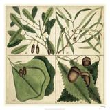 Catesby Leaf Quadrant II Giclee Print by Mark Catesby