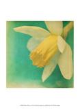 White Flowers V Posters by Jennifer Jorgensen