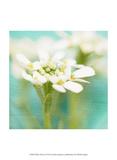White Flowers I Poster by Jennifer Jorgensen