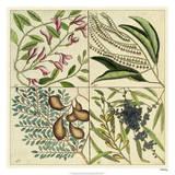 Catesby Botanical Quadrant IV Giclee Print by Mark Catesby