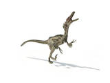 Velociraptor Dinosaur on White Background Poster