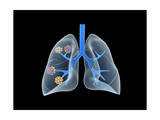 Conceptual Image of Human Lungs Posters