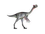 Gigantoraptor Dinosaur, White Background Poster