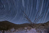 An Octotillo Backdropped by Star Tails in Anza Borrego Desert State Park Photographic Print