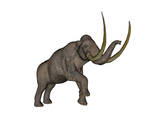 Large Mammoth, White Background Prints