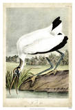 Wood Ibis Giclee Print by John James Audubon