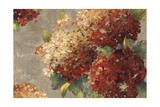 Vintage Hydrangea Prints by Anna Polanski