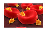 Conceptual Image of Platelets with Red Blood Cells Art