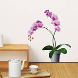 Pale Pink Orchids Mini Wall Decals Wall Decal
