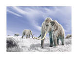 Two Woolly Mammoths in a Snow Covered Field with a Few Bison Prints