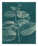 Modern Botany II Giclee Print by Vision Studio