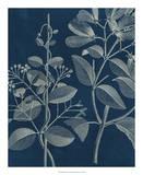 Modern Botany I Giclee Print by Vision Studio