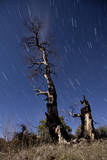 A Partially Burned Tree Backdropped Against Star Trails Photographic Print
