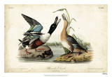Audubon Ducks I Giclee Print by John James Audubon