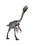 Gigantoraptor Dinosaur, White Background Prints