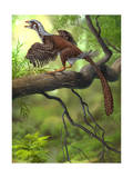 Jeholornis Prima Perched on a Tree Branch During the Early Cretaceous Period Prints