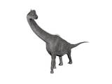 Brachiosaurus Dinosaur, White Background Posters