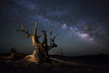 The Milky Way and a Dead Bristlecone Pine Tree in the White Mountains, California Papier Photo
