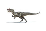 Allosaurus Dinosaur on White Background Prints